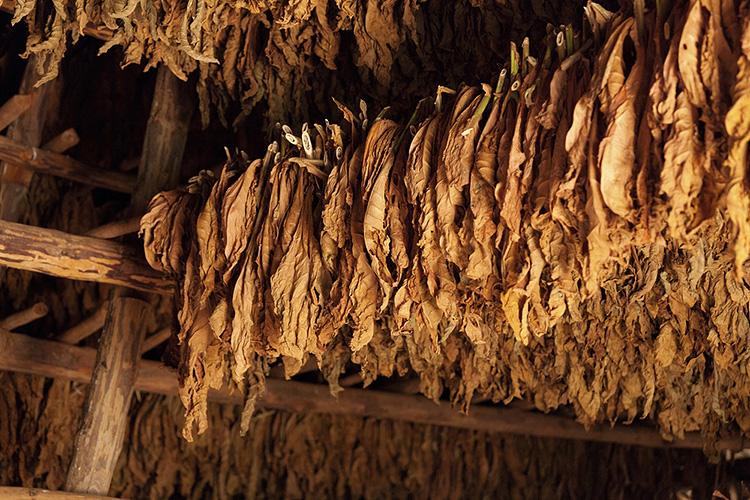 Что такое табак Dark Fired Kentucky?